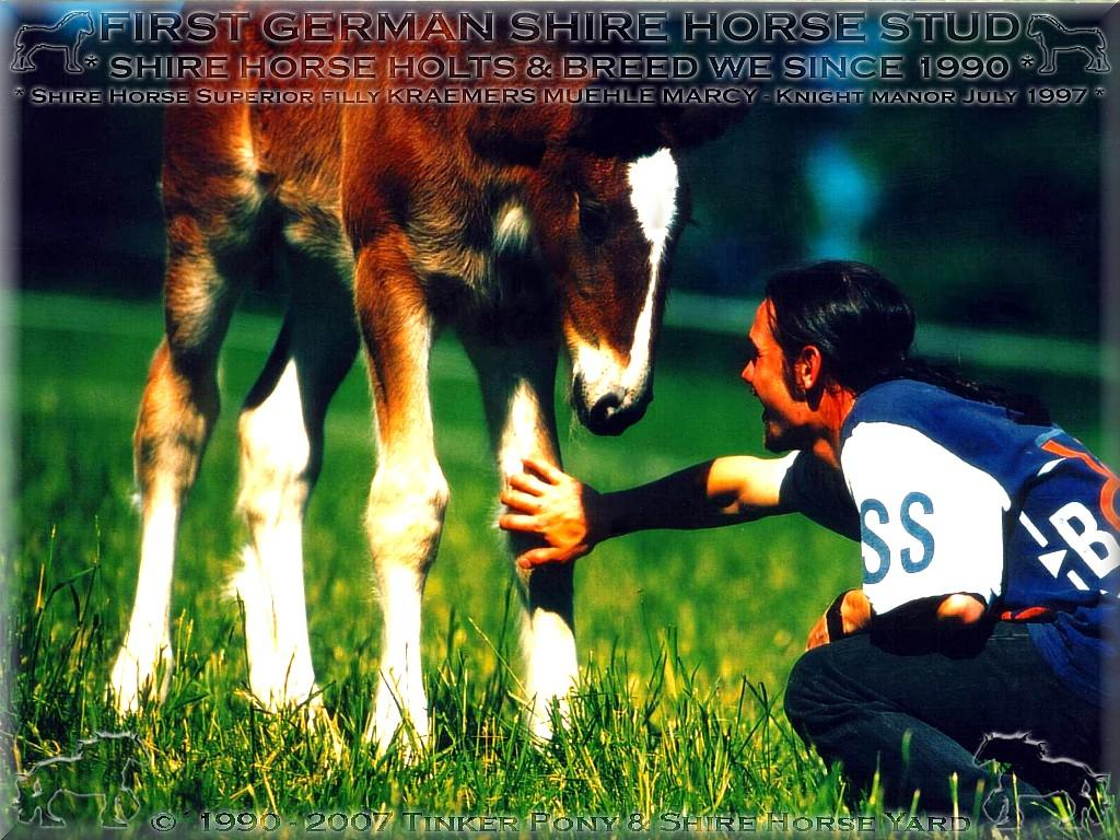The Shire Horse filly KRAEMER` S MUEHLE MARCY was in 1997, at the first September-weekend on the Shire Horse show of the Germans Shire Horse club e. V. in Darmstadt-Kranichstein, the German Shire Horse Federal-Campion-filly of their year.