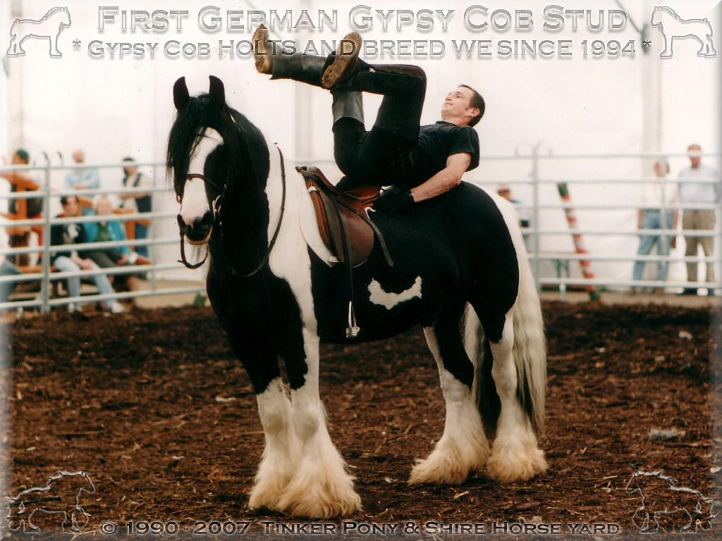 Herzlich Willkommen auf dem Tinker Pony & Shire Horse Hof - Weltweit 1. zur Zucht zugelassener Gypsy Cob, Tinker Zuchthengst der Superlative STRAINGER. Champion of Champions 2004 in den USA