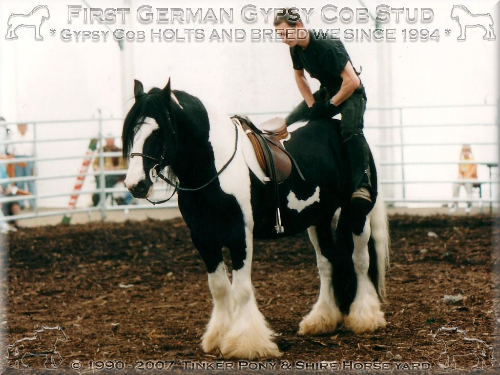 Herzlich Willkommen auf dem Tinker Pony & Shire Horse Hof - Weltweit 1. zur Zucht zugelassener Gypsy Cob, Tinker Zuchthengst der Superlative STRAINGER. Champion of Champions 2004 und 2005 in den USA